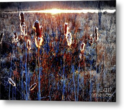 Cattails - Evening Glow On The Marsh Metal Print