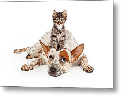 Catte Dog With Kitten On His Head Metal Print by Susan Schmitz