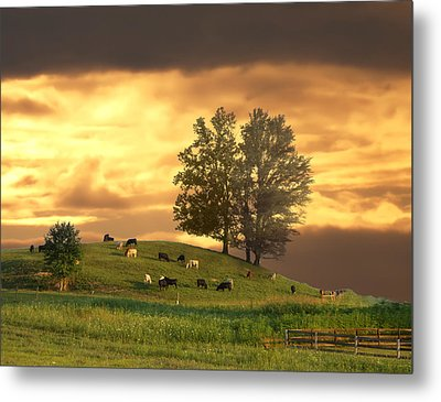 Cattle On A Hill Metal Print