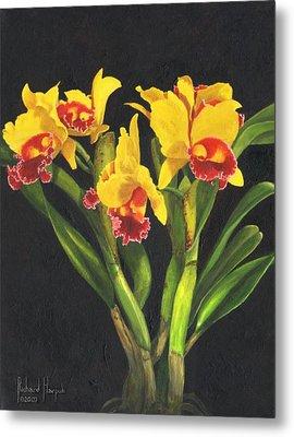 Cattleya Orchid Metal Print by Richard Harpum