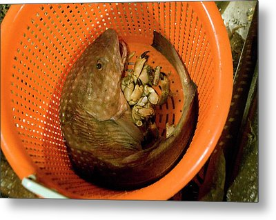 Caught Fish Metal Print