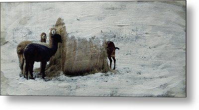 Caught In The Act Metal Print by Kathy Jennings
