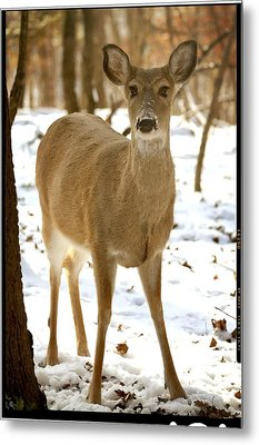 Caught Playing In The Snow Metal Print