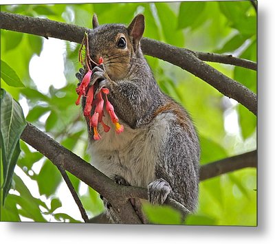 Caught Red Handed Metal Print by Eve Spring