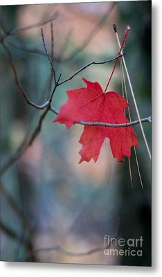 Caught Metal Print by Ron Chilston