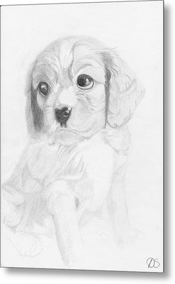 Cavalier King Charles Spaniel Puppy Metal Print by David Smith