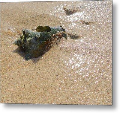Cayman Conch #5 Metal Print
