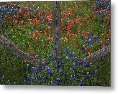 Cedar Fence In Llano Texas Metal Print
