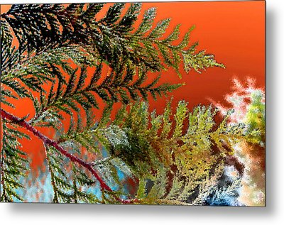 Metal Print featuring the photograph Cedar Canvas by Gwyn Newcombe