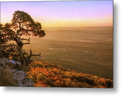 Cedar Tree Atop Mt. Magazine - Arkansas - Autumn Metal Print by Jason Politte