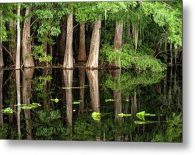 Cedar Trees In Suwannee River, Florida Metal Print