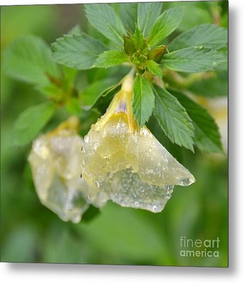 Metal Print featuring the photograph Cellophane Flower- Drenched by Darla Wood