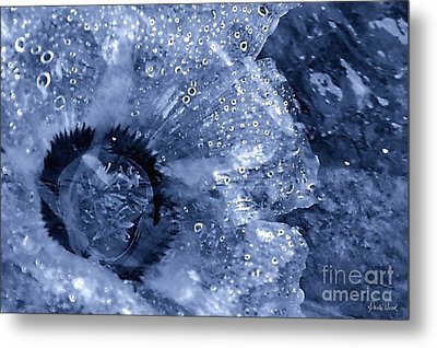 Metal Print featuring the photograph Cellophane Flower- Sapphire by Darla Wood
