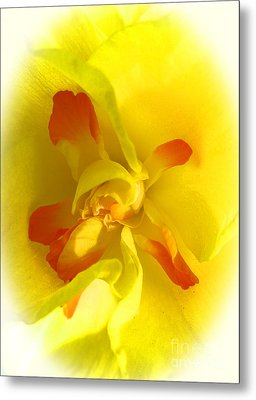 Center Daffodil Metal Print by Tina M Wenger