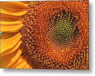Center Of Attention Metal Print by Donna Kennedy