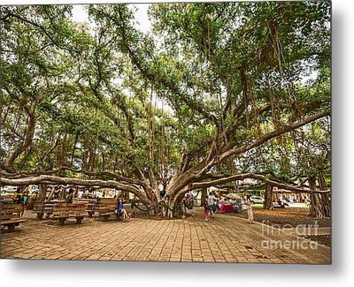 Central Court - Banyan Tree Park In Maui. Metal Print