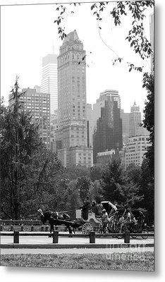 Central Park Metal Print by Kristi Jacobsen