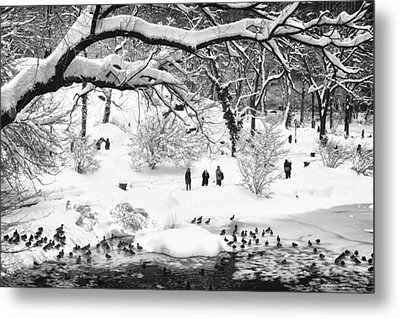 Central Park Lake Blizzard Metal Print by Dave Beckerman