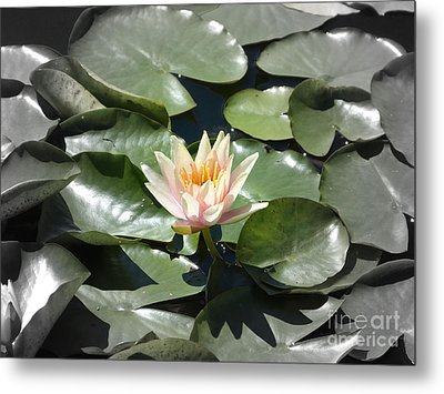 Centrestage Metal Print by Marguerita Tan