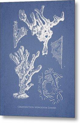 Ceratodictyon Spongiosum Zanard Metal Print by Aged Pixel