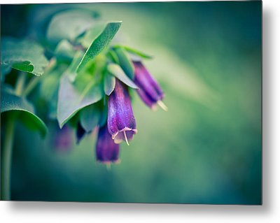 Cerinthe Abstract Metal Print by Priya Ghose