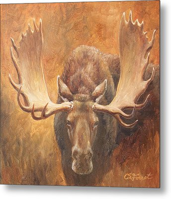 Bull Moose - Challenge Metal Print by Crista Forest