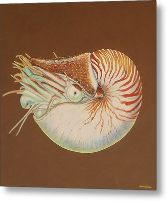 Chambered Nautilus Metal Print by Bonnie Golden