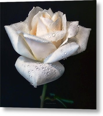 Champagne Rose Flower Macro Metal Print by Jennie Marie Schell