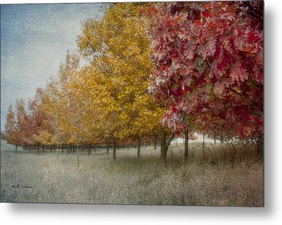 Changing Of The Seasons Metal Print