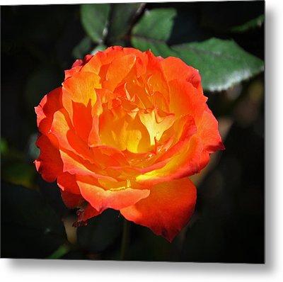 Charisma Rose Metal Print