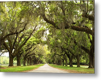 Charleston Avenue Of Oaks Metal Print by Stephanie McDowell