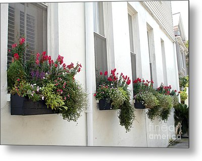 Charleston French Quarter Historic District Dreamy Flowers Window Boxes  Metal Print