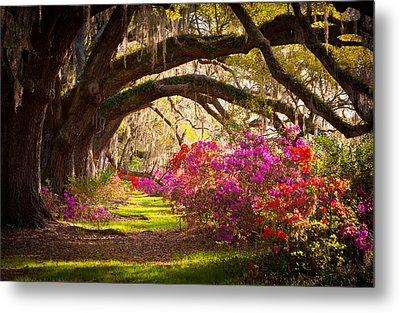 Charleston Sc Magnolia Plantation Gardens - Memory Lane Metal Print by Dave Allen