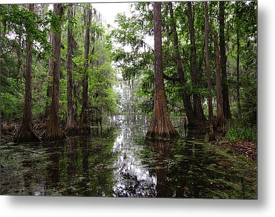Metal Print featuring the photograph Charleston Swamp by John Johnson