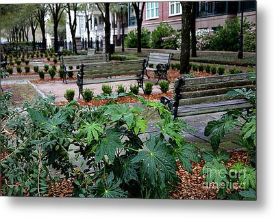 Charleston Waterfront Park Benches Metal Print by Carol Groenen