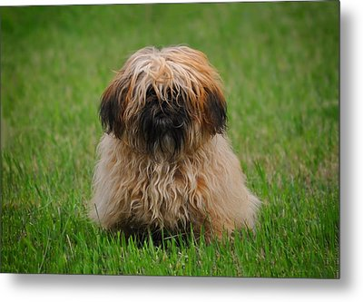 Metal Print featuring the photograph Charlie by Greg Norrell