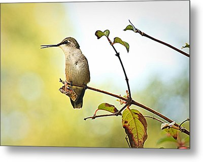 Metal Print featuring the photograph Chatter by Tammy Schneider