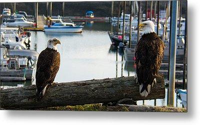 Chatty Bald Eagles Homer Alaska Metal Print