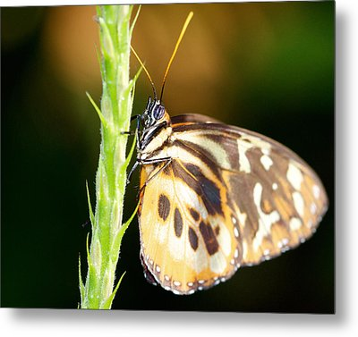 Checkered Past 16x20 Metal Print by Pamela Gail Torres