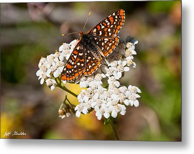 Metal Print featuring the photograph Checkerspot Butterfly On A Yarrow Blossom by Jeff Goulden