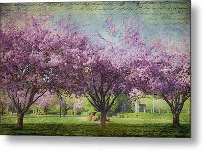 Cheery Cherry Trees - Nostalgic Metal Print