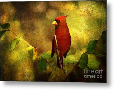 Cheery Red Cardinal  Metal Print by Lianne Schneider