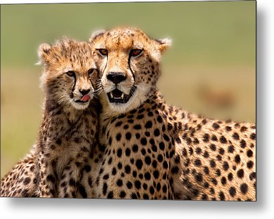 Cheetah Mother And Cub In Masai Mara Metal Print by Maggy Meyer
