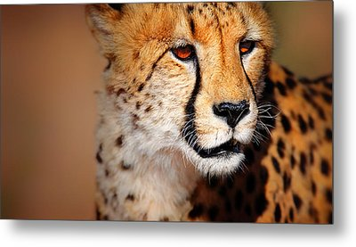 Cheetah Portrait Metal Print