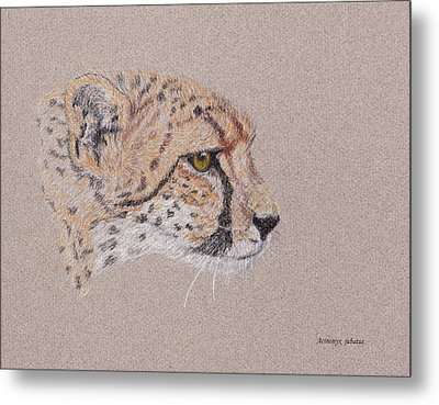 Cheetah Metal Print by Stephanie Grant