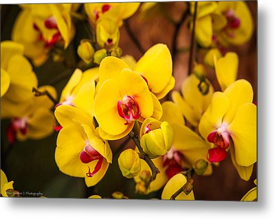 Metal Print featuring the photograph Chelsea Yellow by Ross Henton