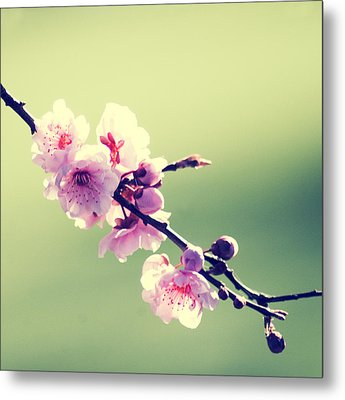 Metal Print featuring the photograph Cherry Blooms by Yulia Kazansky