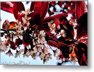 Cherry Blosoms 2 Metal Print by Danielle  Parent