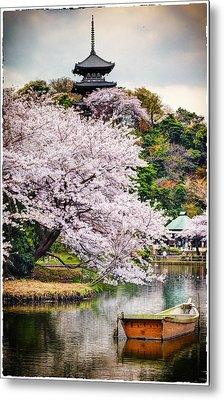 Cherry Blossom 2014 Metal Print by John Swartz