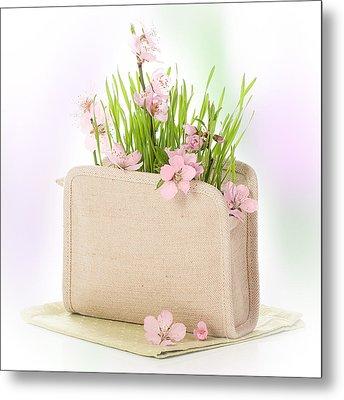 Cherry Blossom Metal Print by Amanda Elwell
